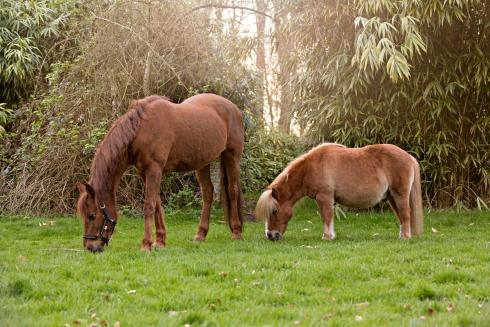 Coaching met paarden, paardencoaching